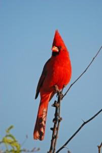 lsat cardinal rule